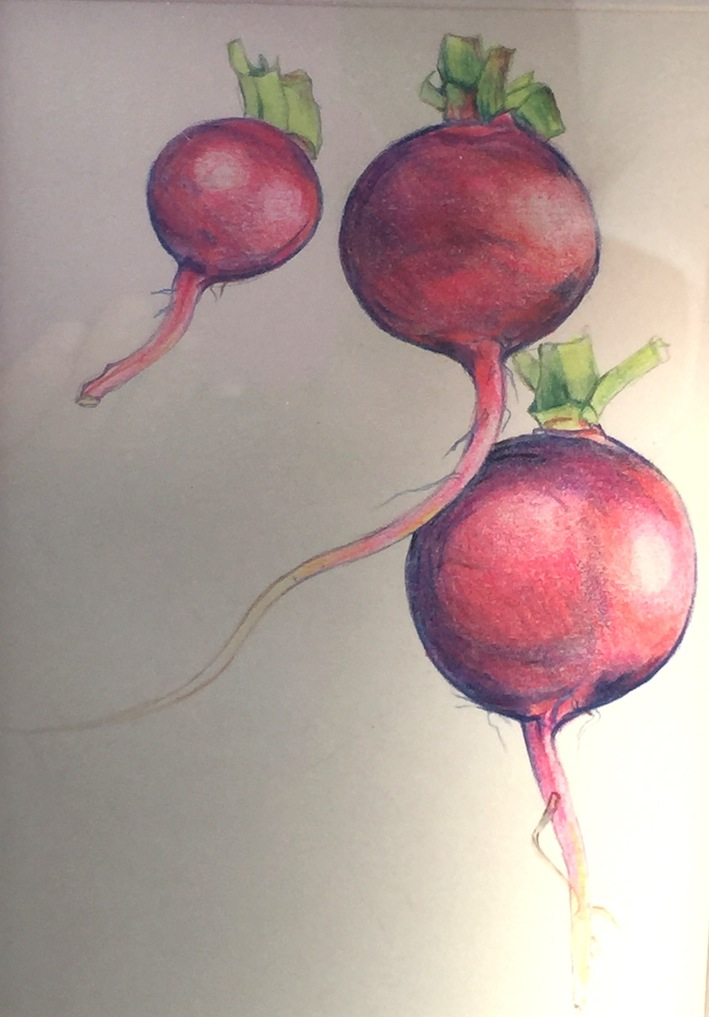 Virginia Burdon | Radishes | McAtamney Gallery | Geraldine